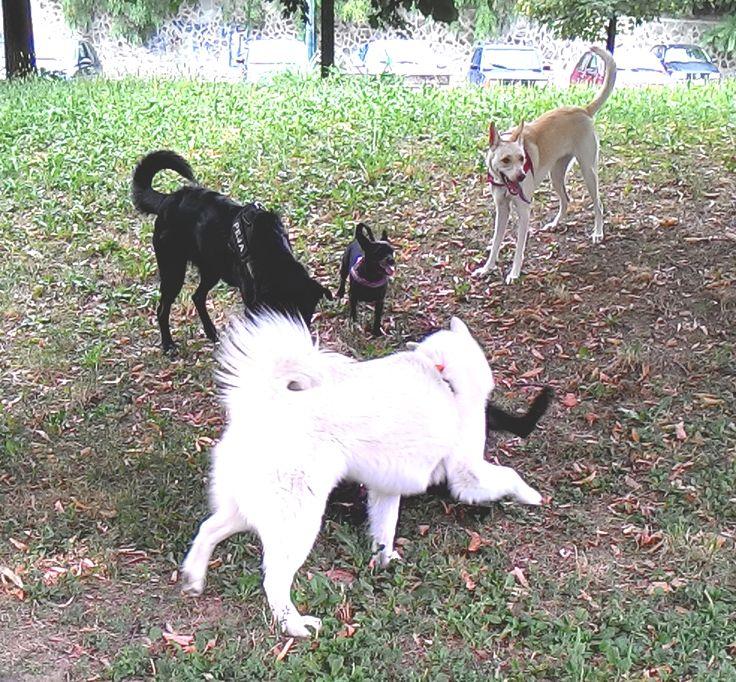 04/08/2015 - Torino con Peja, Koko, Temi e Zara