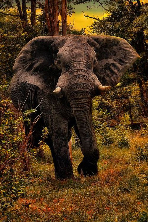 Elephant...  Very angry | By Yara GB