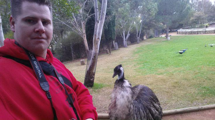 Animal Encounter - Emu Canberra Zoo