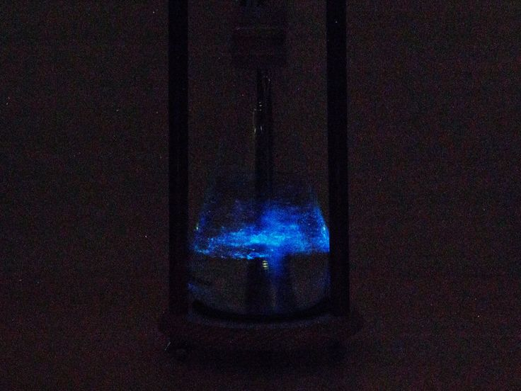 275 Best Magic Bioluminescence Images On Pinterest