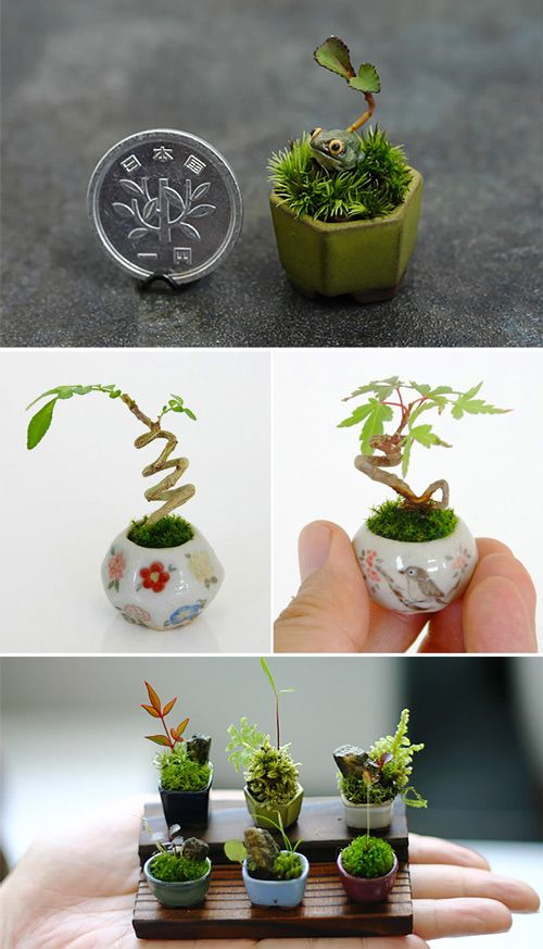 Have a look at these cute plant miniatures, they may inspire you to do something big!