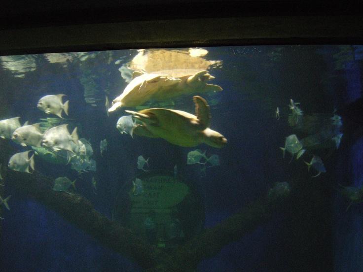 Virginia Beach Aquarium I Have Been Here Pinterest