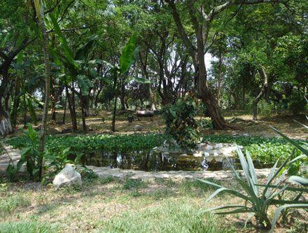 Ecoparque Los Písamos - Cll 73A Dg 26C1  Los visitantes también pueden observar animales como el sapo común, la rana arbórea, lagartos, iguanas, el águila pescadora, el águila blanca y el gavilán caminero, entre otros. Como aspecto novedoso, el ecoparque Los Písamos cuenta con una huerta comunitaria, que ha sido creada por las familias del sector como alternativa de bienestar y sustento. #DeCaliSeHablaBien