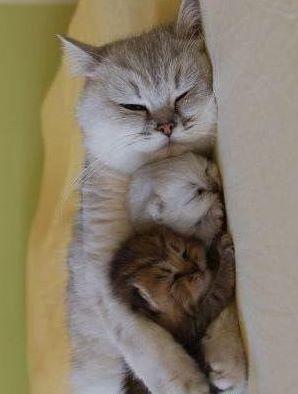 Mamãe e seus bebês