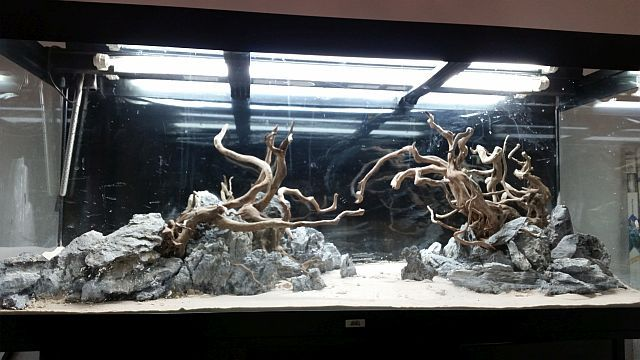HARDSCAPE for 450 l Aquascape 2015 by Silverlihgt (germany) . Pin by Aqua Poolkoh