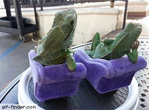 Lounging Lizards | Gif Finder – Find and Share funny animated gifs