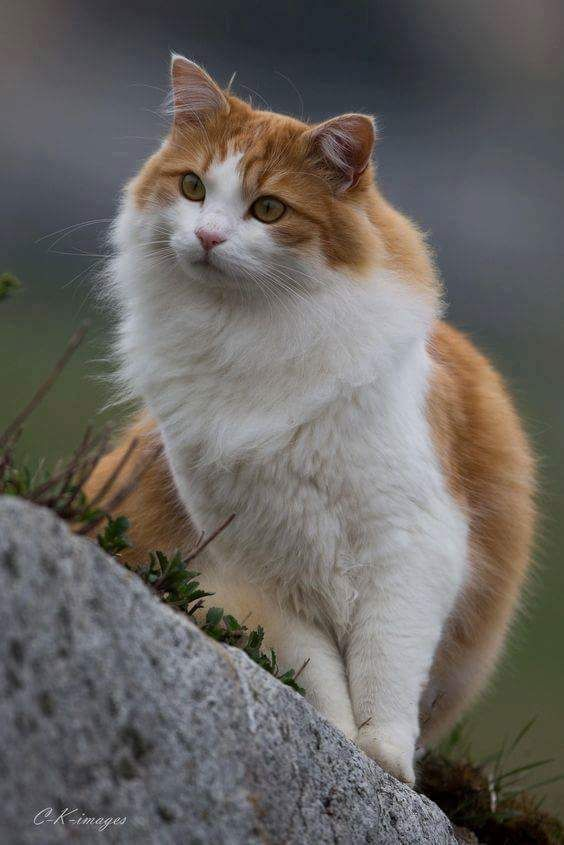 Best dressed in town! and like OMG! get some yourself some pawtastic adorable cat apparel! http://www.mainecoonguide.com/fun-facts-maine-coon-cats/