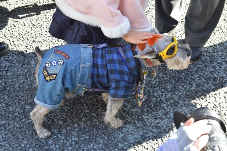 Dressed up dog in Ginza