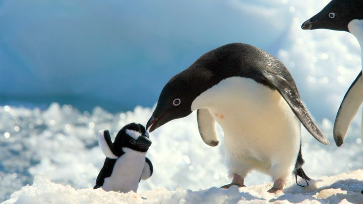 Animals penguins skyscapes snow toys children wallpaper