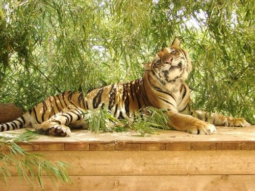 Tiger Creek Wildlife Refuge, Tyler, TX. Very informative tours of the cats. Always Love going to this place!