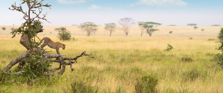 #TanzaniaSafari you will see so many amazing animals and have incredible adventures where you will just want to relax with a good book and soak up some rays. Get more ideas @ https://goo.gl/PPSieu