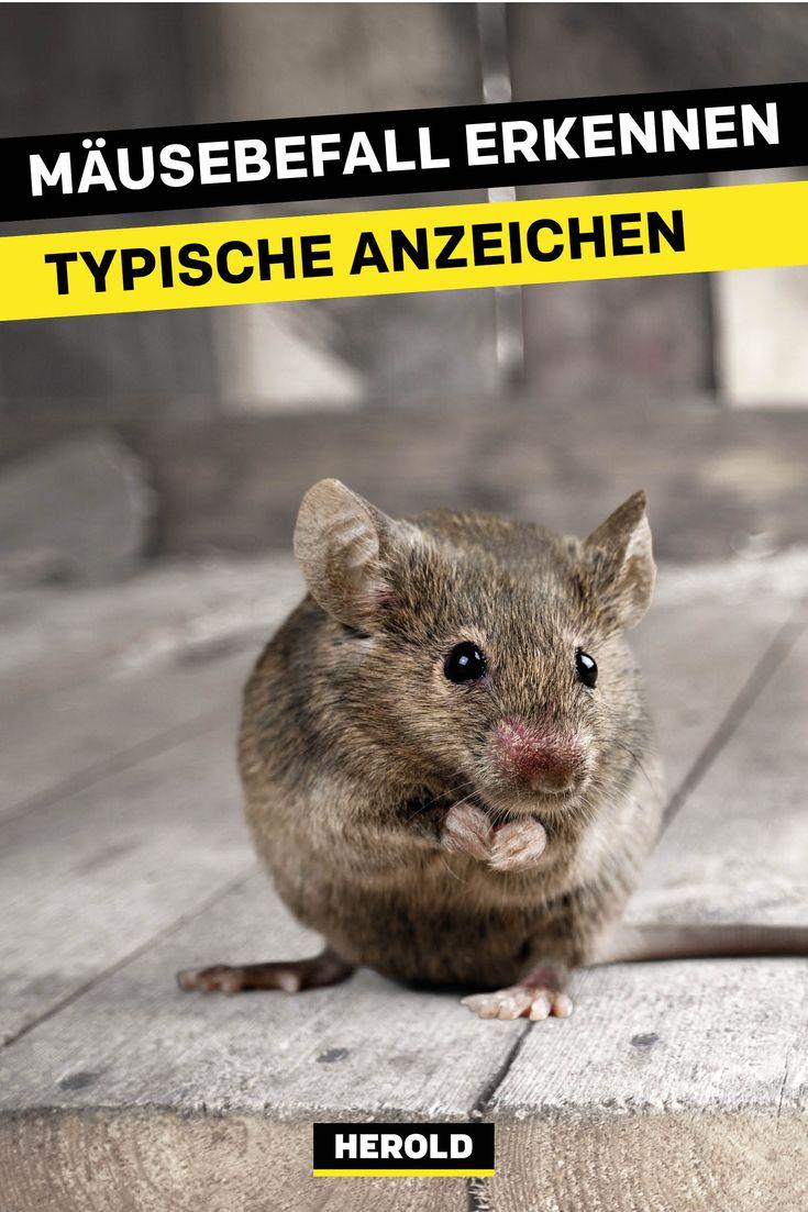 So Wirst Du Mause Im Haus Los Schadlinge Im Haus Maus Im Haus Ameisen Im Haus
