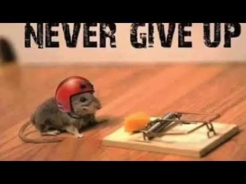 Great video for students teaching about grit, why it is ...