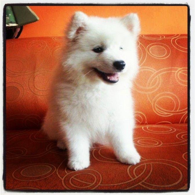 www.cachorritos.co