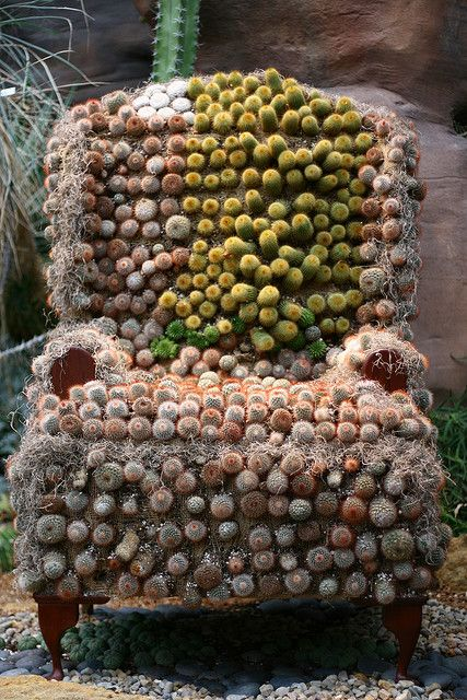 succulent chair idea