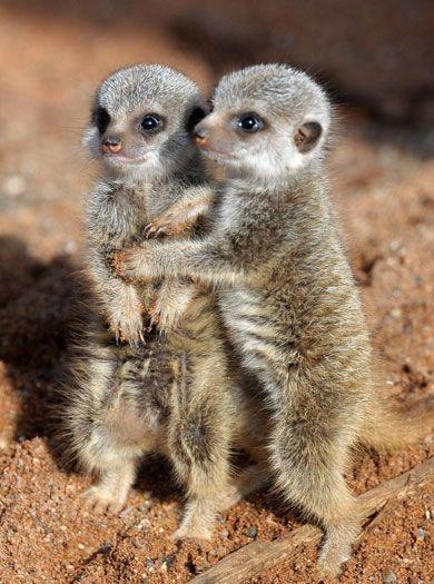 zoo animals | Chester zoo enjoys baby boom of rare animals - AOL Travel UK