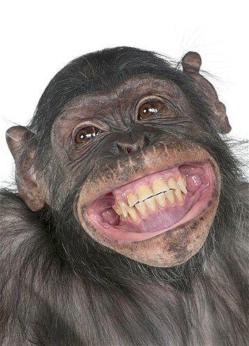 Imagem: 'Sorridentes', eles surpreenderam os fotógrafos (© Caters News)