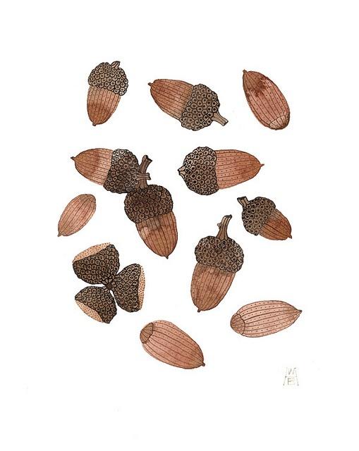 acorns and caps no.2 by Golly Bard, via Flickr
