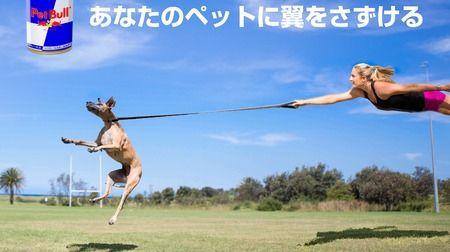 ペットに翼をさずけるPet Bull誕生--Red Bullの効果が人間で十分実証されたエイプリルフール