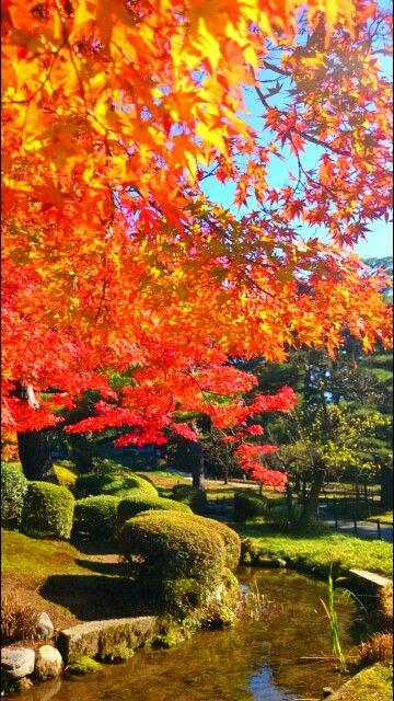 Red foliage at the Kenroku Garden, Kanazawa, Japan(Ver. 4. 1)
