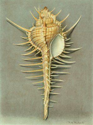 intage Shell Print, Paul A. Robert, 1930's