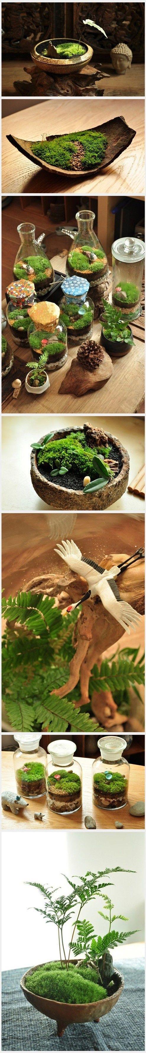 Moss gardens, for Kensie to make a fairy garden....so cute.: