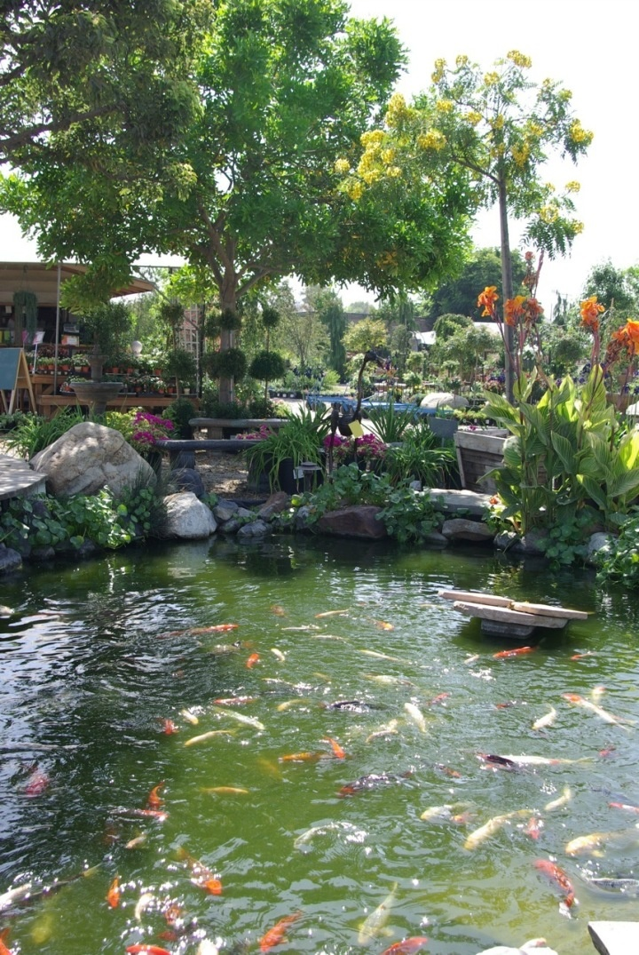 2567 Best Ponds Images On Pinterest Koi Ponds Garden