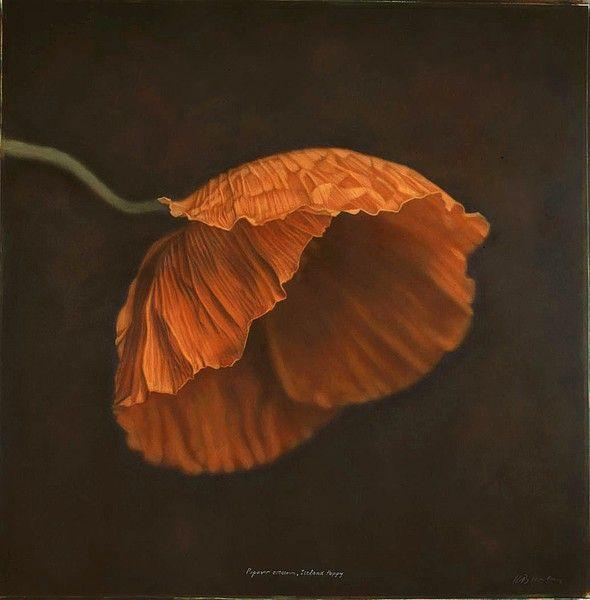 Iceland Poppy  Artist: Kate Breakey: Breakey Iceland, Inspiration, Art Photography, Color, Art Poppy Flowers, Fine Art, Poppies