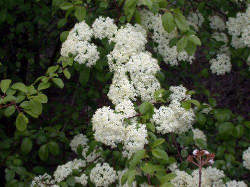 native michigan plants
