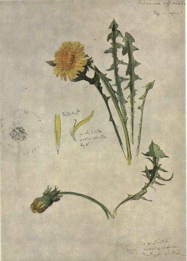 Studie květin,Josef Mánes -Mánes udělal více studií různých květin, později vyšli jako kniha Květiny