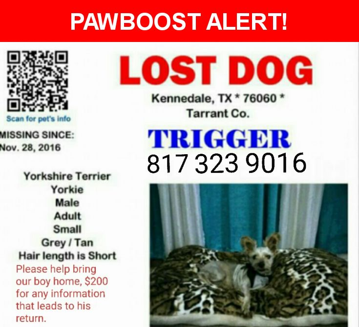 Please spread the word! Trigger was last seen in Kennedale, TX 76060.  Description: Small, close shave, stub tail. He is our family. Picture included.   Nearest Address: Kennedale, TX near police station