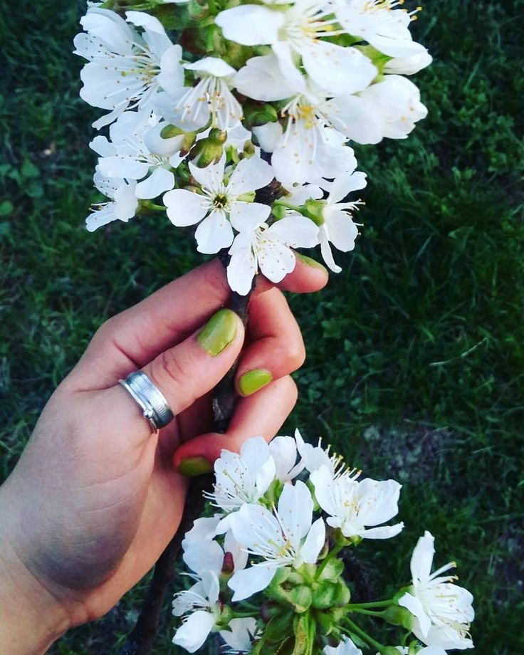 #spring #green #white