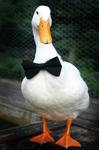 Samuel Puddlington The Duck looking very dapper