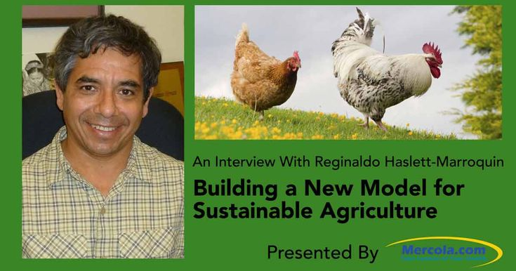 How Regenerative Agriculture Can Go Large-Scale, with the Help of Chickens