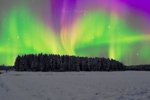 Winter night by Floreina-Photography #winter #night #photography #aurora borealis #northen lights #cold #beautiful #snow #field #gorgeous #finland #scandinavia #lumi #suomi #revontulet #talvi