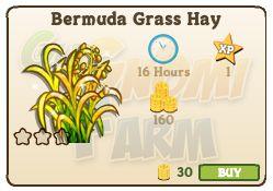 Nuova coltivazione disponibile nel Market: Bermuda Grass Hay