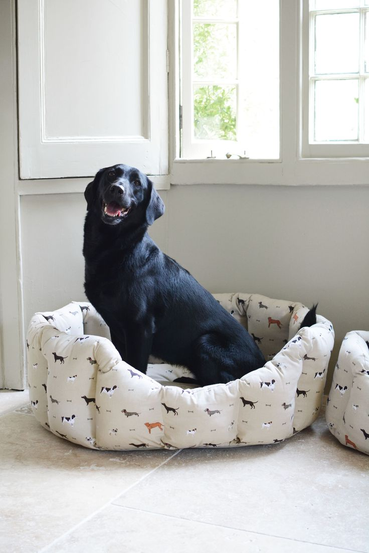 Best Dog Beds For Springer Spaniels