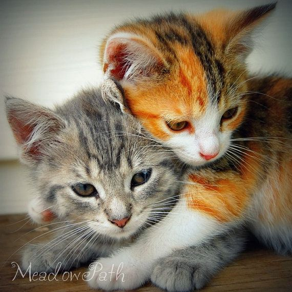 Cute kittens.: Friends, Animal Baby, Color, Sibling, Pet, Baby Animal, Kittens, Kitty, Baby Cat