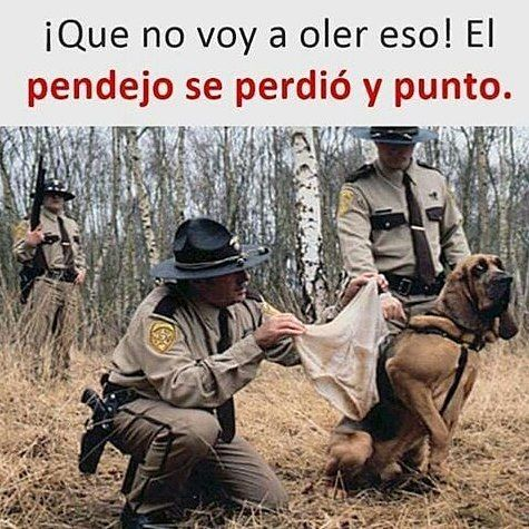 "346 Likes, 4 Comments - humor memes animales risas (@memesconmascotas) on Instagram: ""Jajajajajajja  #meme #risa #humorlatino #panama  #colombia #venezuela #chile #argentina #humornegro…"""