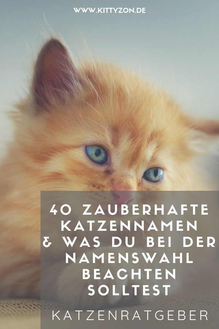 Den Richtigen Katzennamen Zu F Mit Bildern Katzen Namen