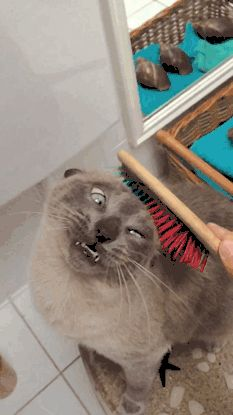 Кот любит эту процедуру.