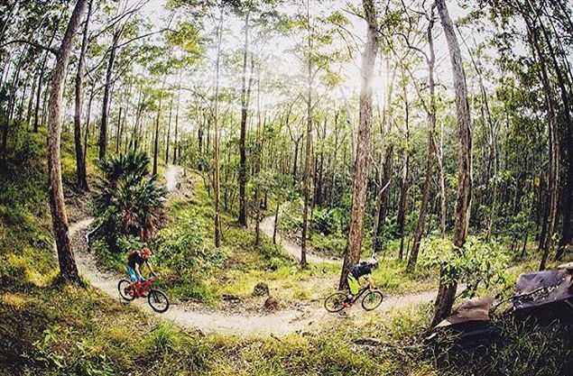 Exploring the sensational Wooroi mountain bike trails in the Tewantin National Park. These trails have recently undergone extensive upgrades and are a must see for anyone seeking some adventure during their next visit to Noosa!