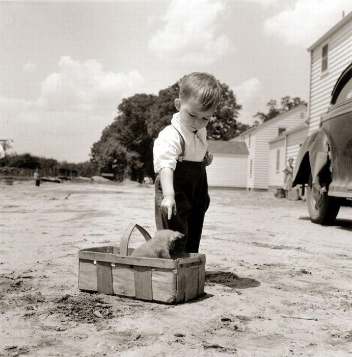 <3: Picture, Vintage Photos, West Virginia, Vintage Photographs, Vintage Children, Boys, Puppys, Dog, Point Pleasant