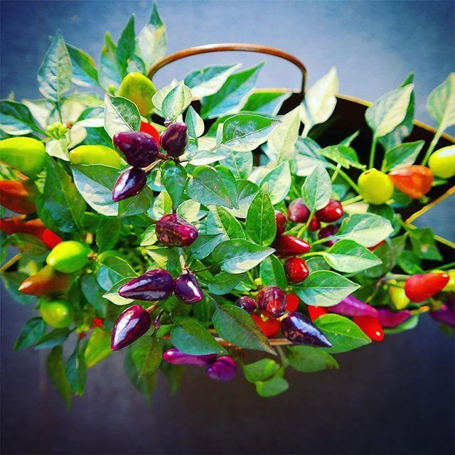 #decoracion #plants #terrasai