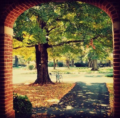 Sweet Briar College - one of my favorite views