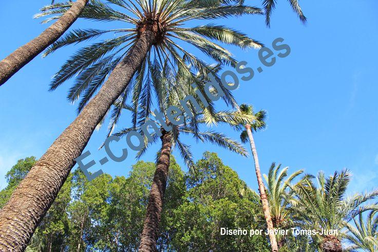 Informa sobre la poda de palmeras mediante estrategias de marketing de contenidos.