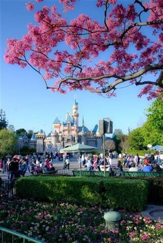 Disneyland, Anaheim, my childhood dreams came true, favourite ride was the teacups