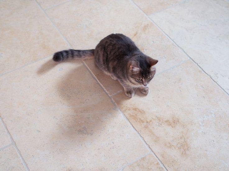 Travertinfliesen mit Fußbodenheizung - Katzen mögen es mollig warm – jonastone.de