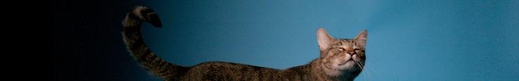 Aesop Rock -