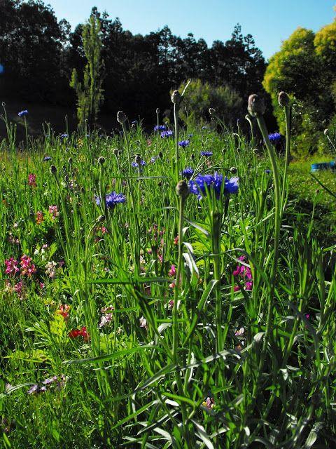 A new wildflower garden.